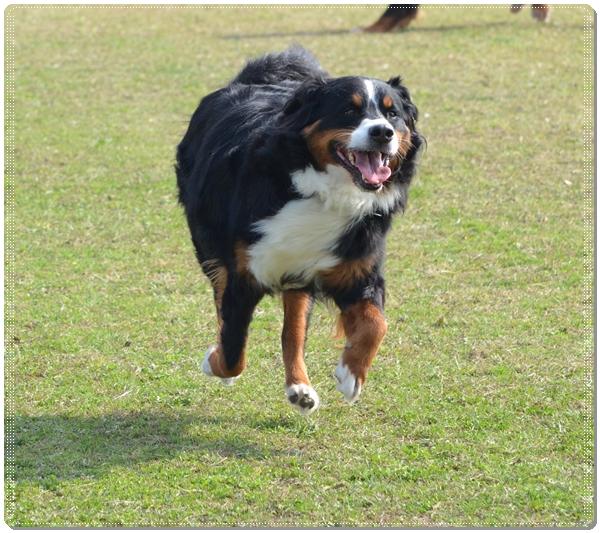 2015-10飛行犬エルフ