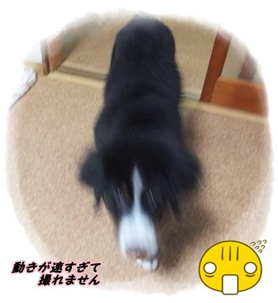 2015-11まる子ちゃん1