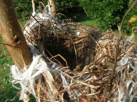 鳥の巣-4