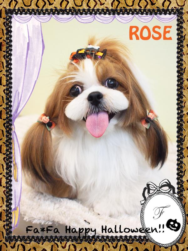 ROSEちゃん10−2