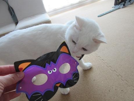 猫マスクふきちゃん1