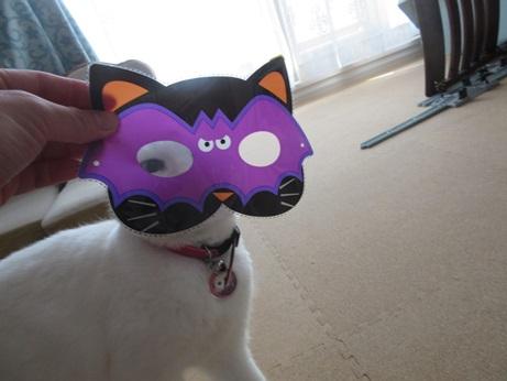 猫マスクふきちゃん2