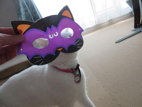 猫マスクふきちゃん3