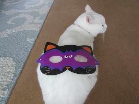 猫マスクふきちゃん4