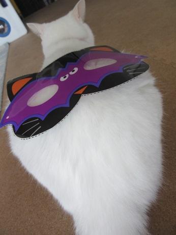 猫マスクふきちゃん6