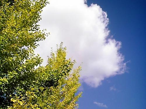 初秋 空に木2