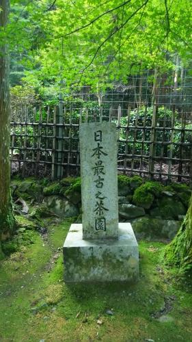 20161008 日本最古の茶園