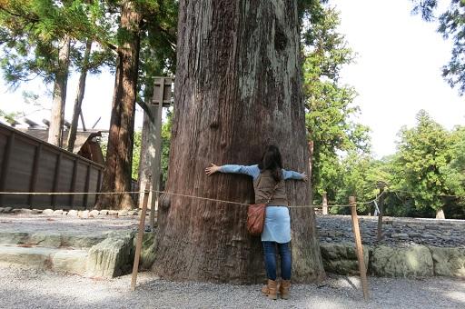 11-8大樹