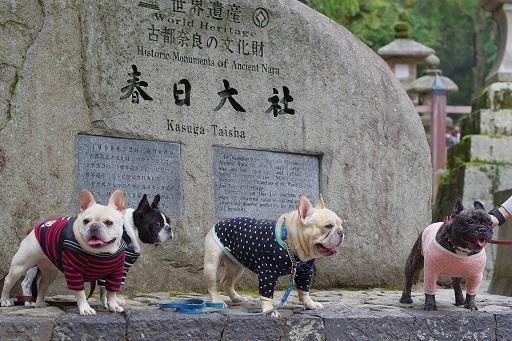 11-9春日大社記念撮影