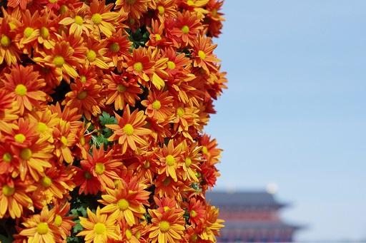 11-9花から平城京