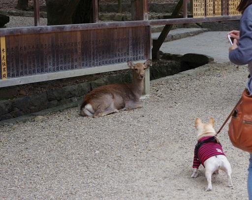 11-9うたと鹿