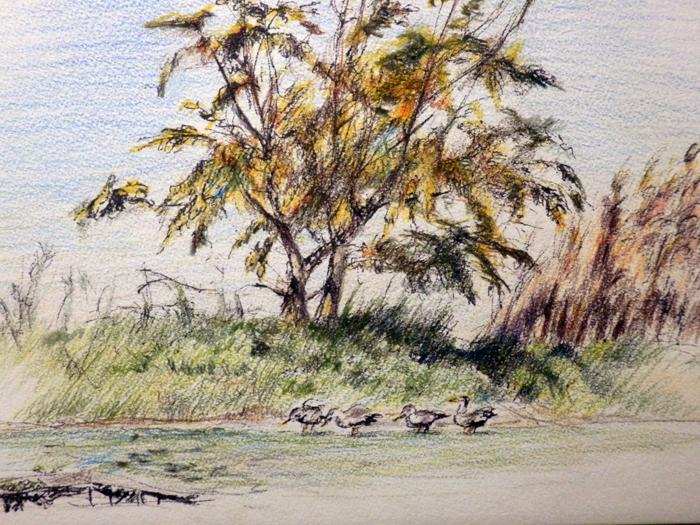 川沿いの立木と鴨