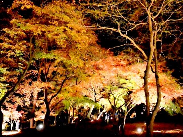 月の石もみじ公園 (1)