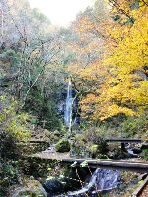 払沢の滝 (11)