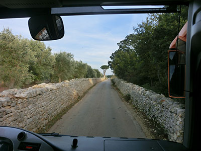 alberobus02.jpg
