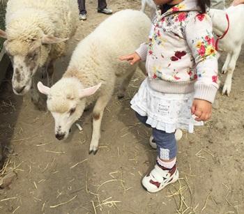 ハーベストの丘 わんわんふれあい広場 羊とやぎ