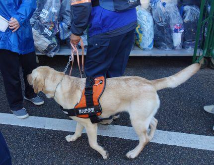警察犬が不審な荷物をチェック