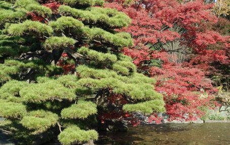 二の丸庭園 松と紅葉