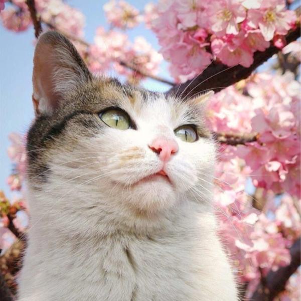 去勢されて初めての春