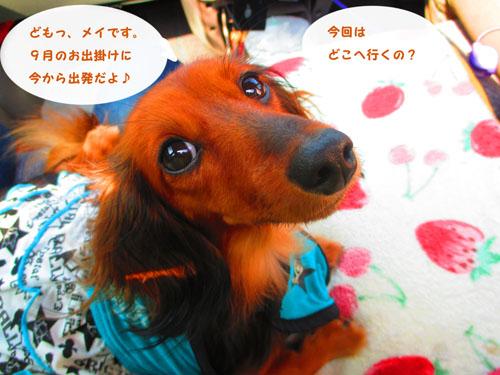 2015-09-yamanasi2.jpg