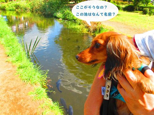2015-09-yamanasi23.jpg