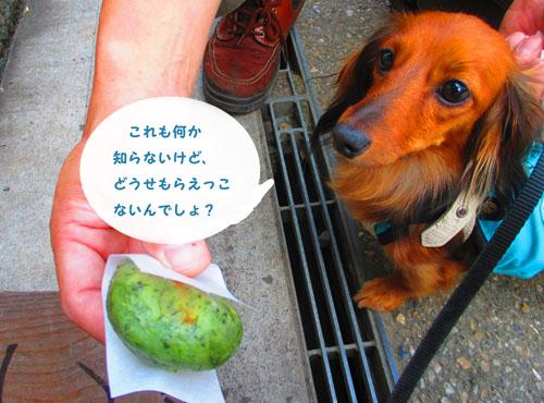 2015-09-yamanasi36.jpg