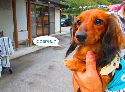 2015-09-yamanasi47.jpg