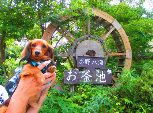 2015-09-yamanasi51.jpg