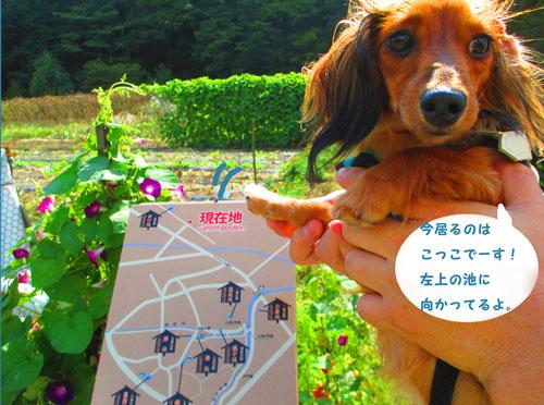 2015-09-yamanasi59.jpg