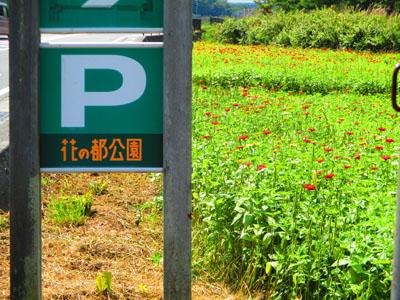 2015-09-yamanasi6.jpg
