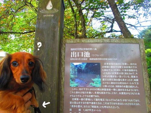 2015-09-yamanasi62.jpg