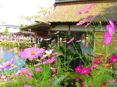 2015-09-yamanasi67.jpg