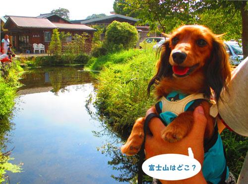 2015-09-yamanasi70.jpg