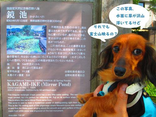 2015-09-yamanasi71.jpg