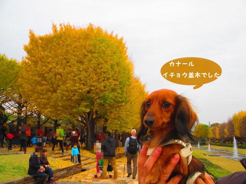 2015-11-showakinen38.jpg