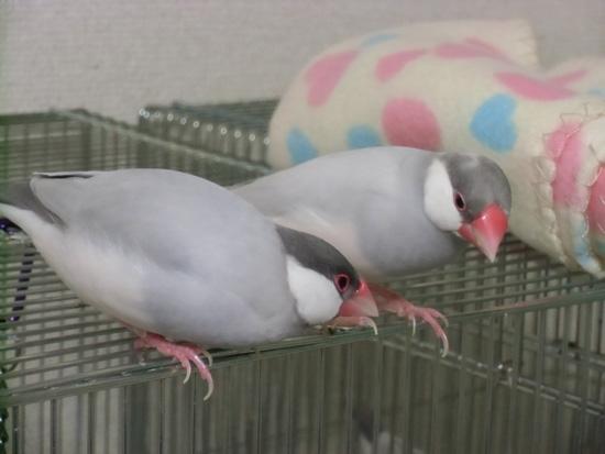 放鳥デート