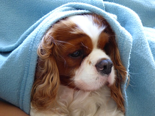 ギネス毛布