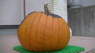 かぼちゃ201510