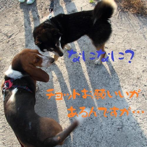 IMG_151118-0.jpg