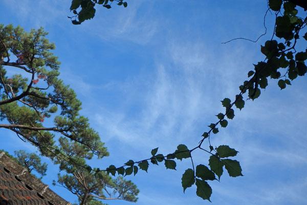 空と葉っぱ