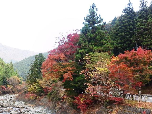 20151031_01木の香の紅葉