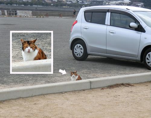 ネコ発見。ココで見かけるとは珍しいねっ!