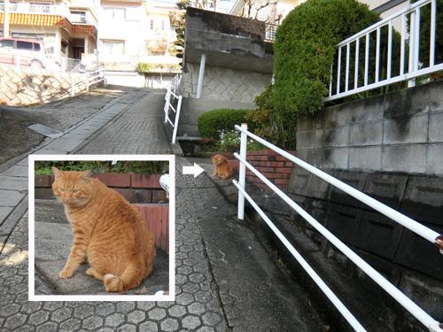ネコ発見!その3。