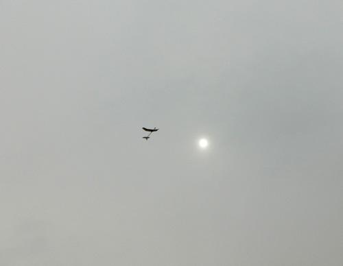 kh-1605飛んでるところ。