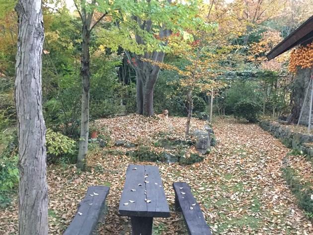 庭の落ち葉とらく
