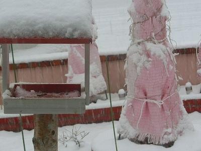 雪つもったー2