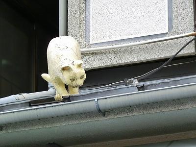 にゃおーんが屋根に