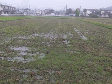 田んぼ水浸し2