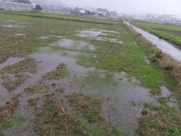 田んぼ水浸し3