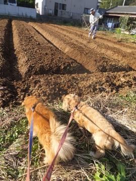 干支小物作りと玉ねぎ植え8